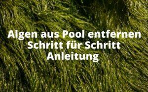 Algen aus Pool entfernen Anleitung